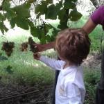 progetto ambientale scuola infanzia